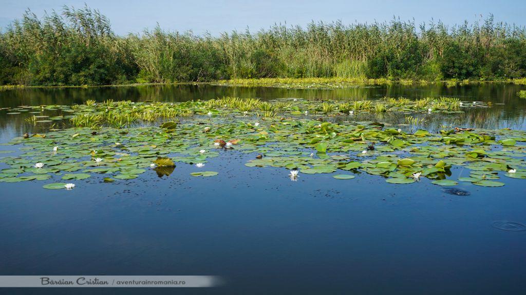 Canalul Barbosu delta