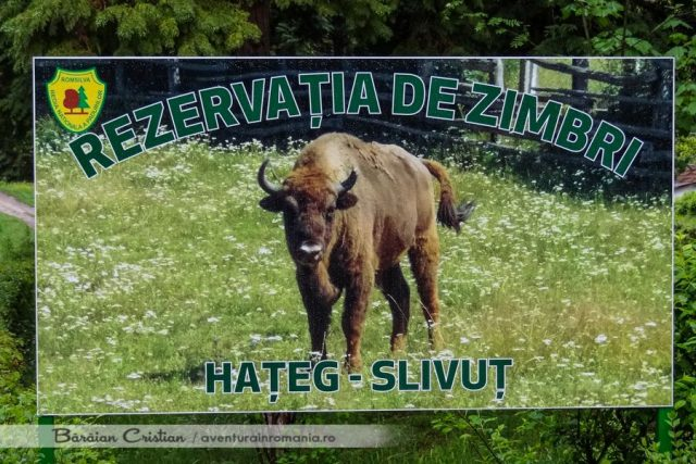Rezervatia zimbri Hateg-Slivut