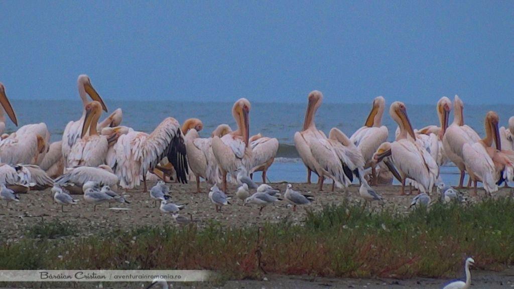Golful Musura Delta