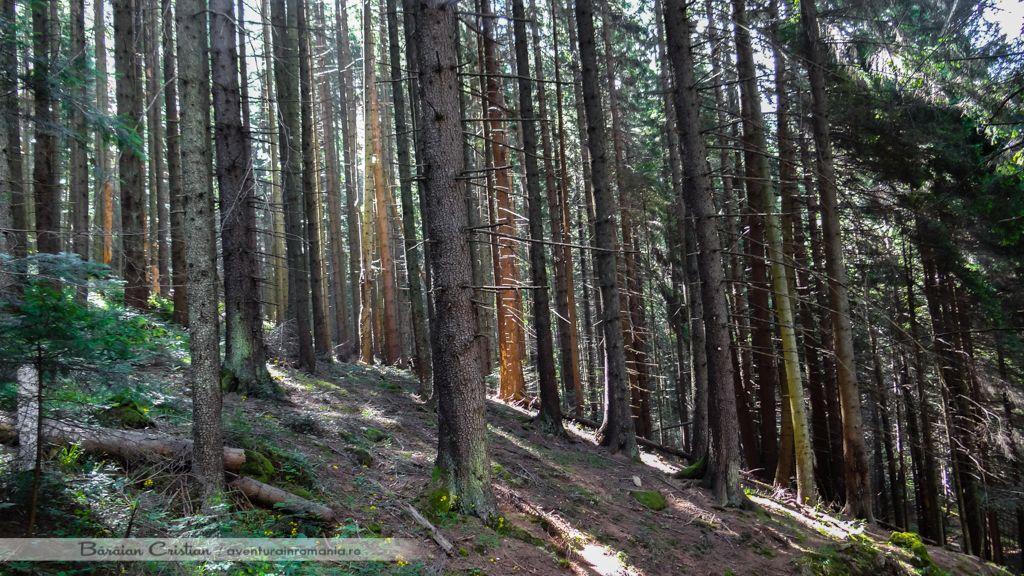 Traseu Cascada Duruitoarea