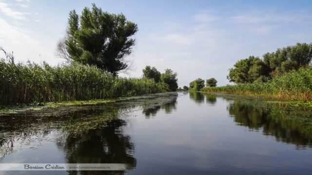 Canalul Busurca