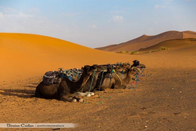 Maroc_Deșert_safari_cu_cămila