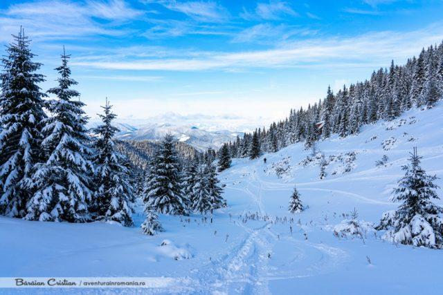 Munții_Călimani
