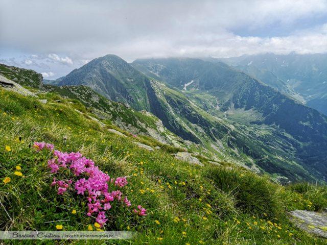 Vârful Lespezi